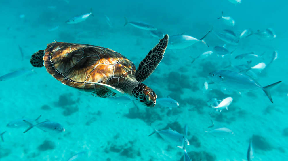 Spectacular day tour in Red Sea Cruise for Snorkeling in Tiran Island